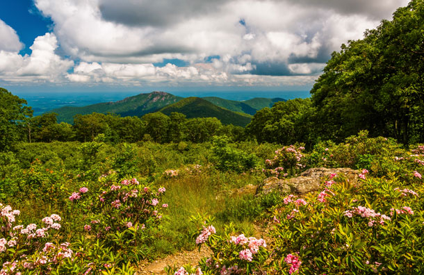 Shenandoah National Park in Virginia