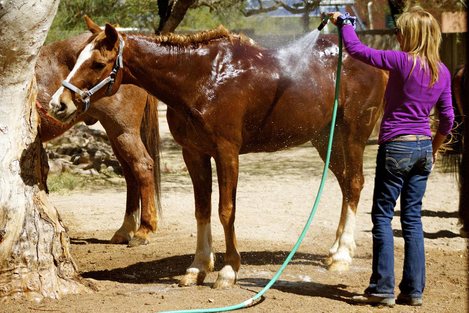 White Stallion Ranch; Courtesy of White Stallion Ranch