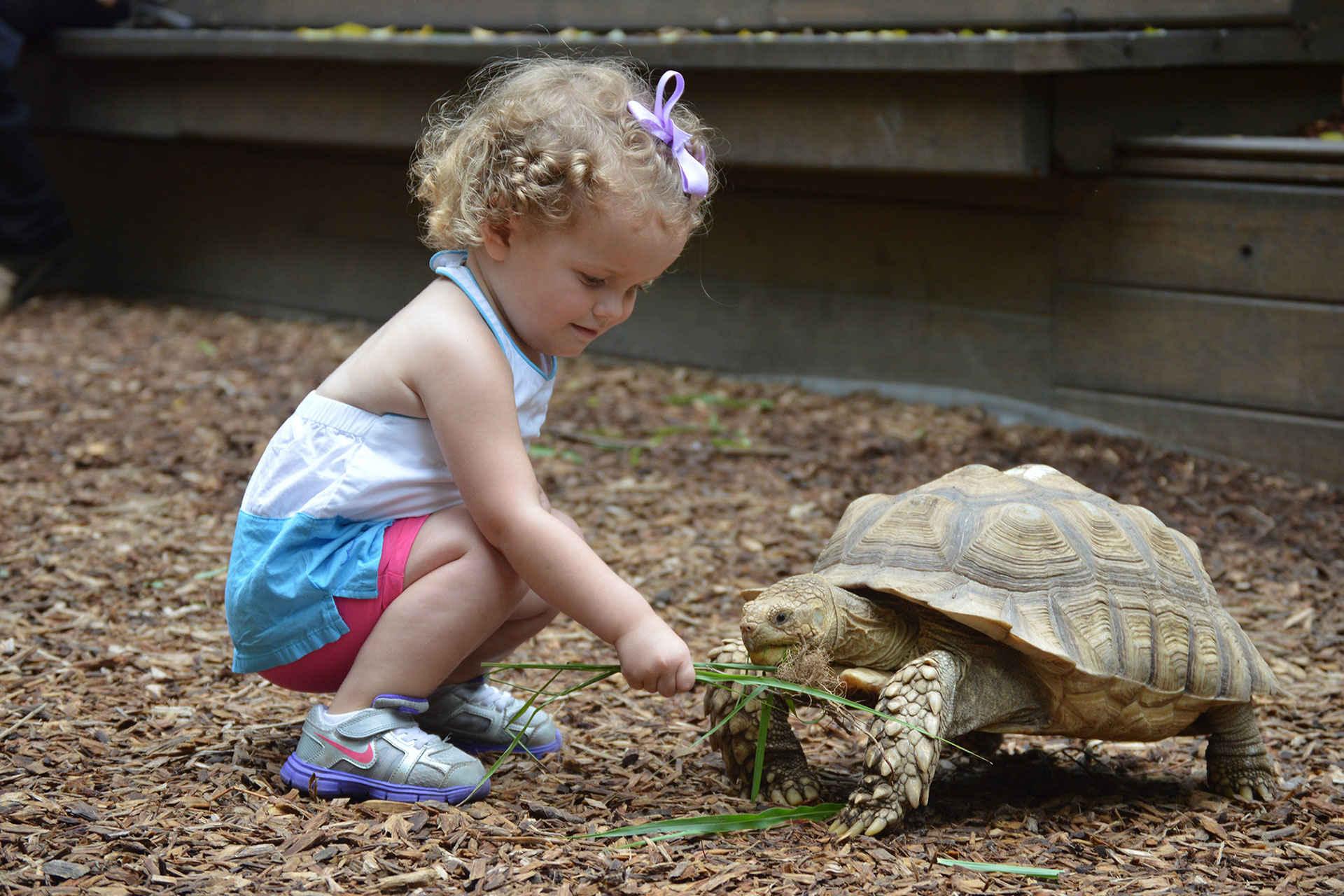 Little Girl Feeding Turtle at Nashville Zoo; Courtesy of Samantha Currington/Nashville Convention & Visitors Corp.