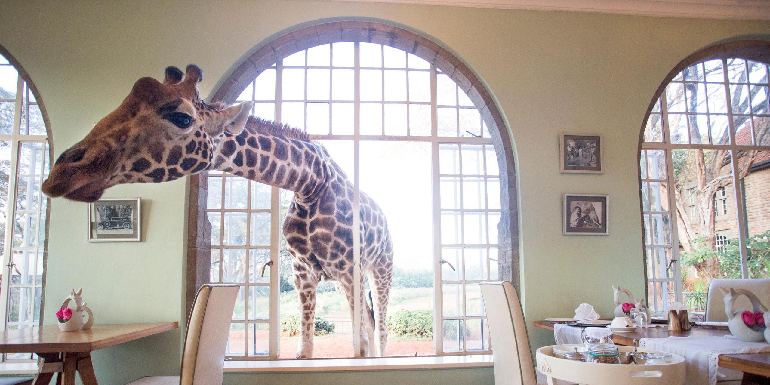 Giraffe Manor; Courtesy of Giraffe Manor