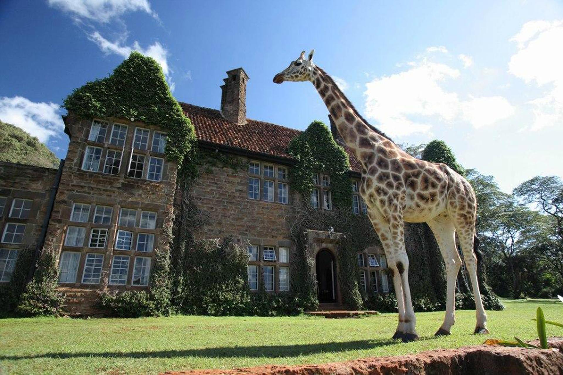 Photo Courtesy of Giraffe Manor