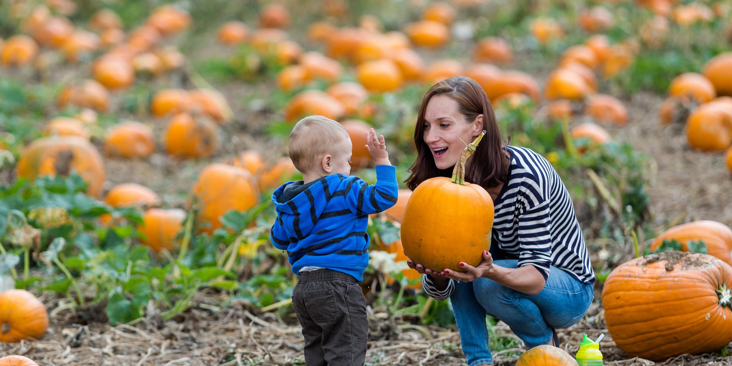 Choosing a pumpkin at a pumpkin patch on Fall day. ; Courtesy of Arina P Habich /Shutterstock