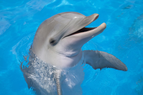 A dolphin smiling for the camera.