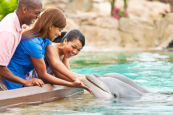 A family meeting a dolphin at SeaWorld Orlando in Florida.