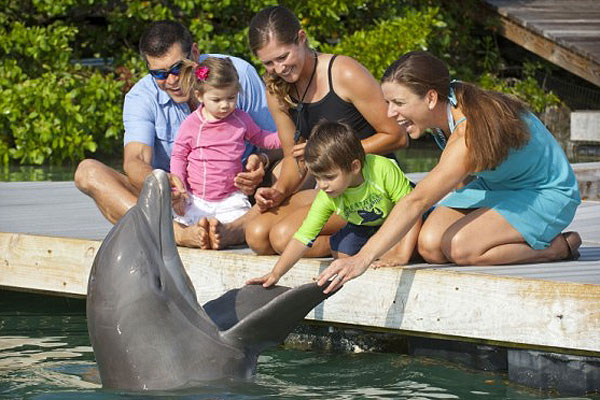 A family playing with a dolphin at Hawks Cay Resort in the Florida Keys.