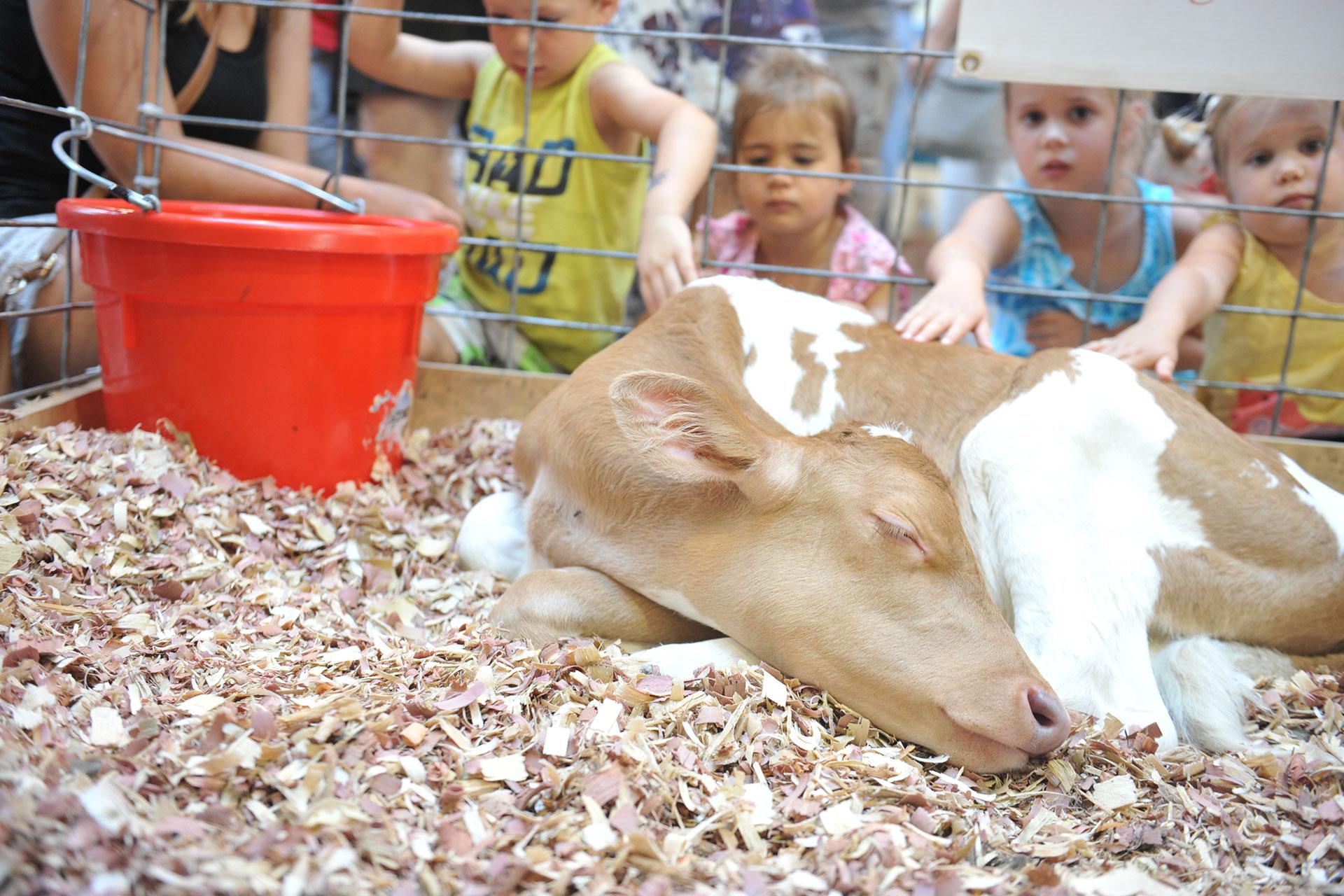 Iowa State Fair; Courtesy of Iowa State Fair