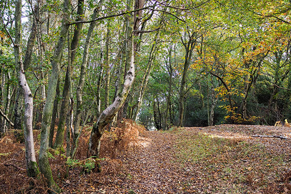 Ashdown Forest in England