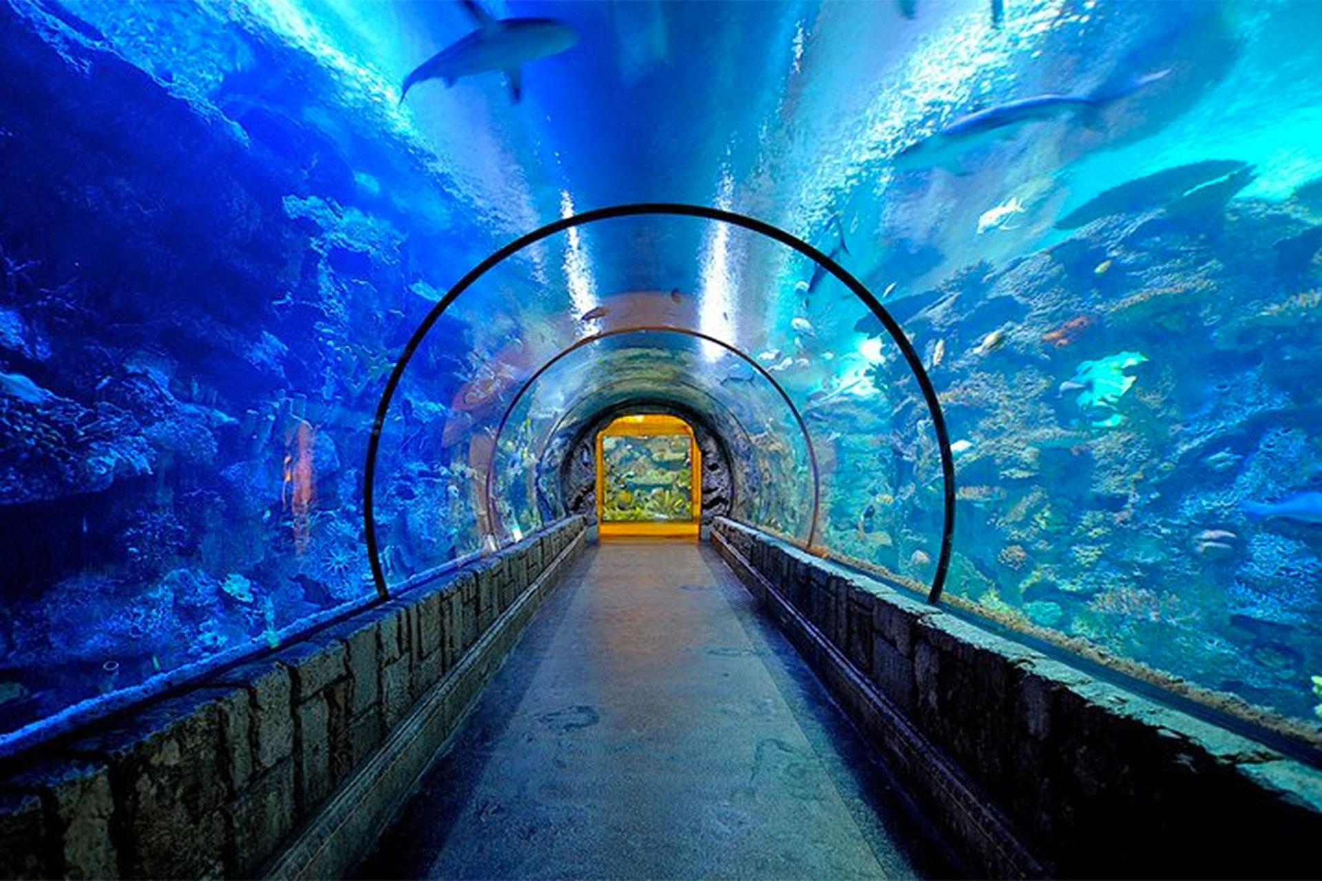 Aquarium at Mandalay Bay Resort & Casino in Las Vegas