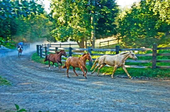 western freuden gast ranch sandpoint idaho