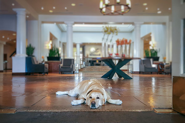 Dog at Fairmont Hotel