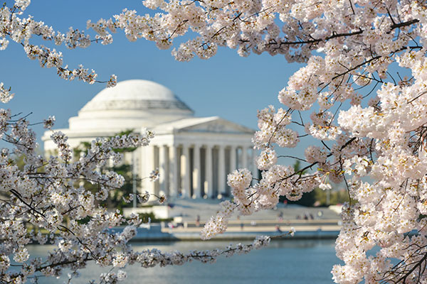 Family Guide To The National Cherry Blossom Festival In Washington