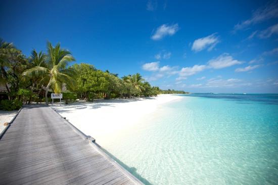 Niyama Maldives Official Site   Resort in Maldives