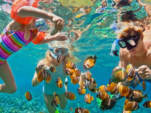 Family Snorkeling with Fish; Courtesy of Tropical Studio/Shutterstock.com