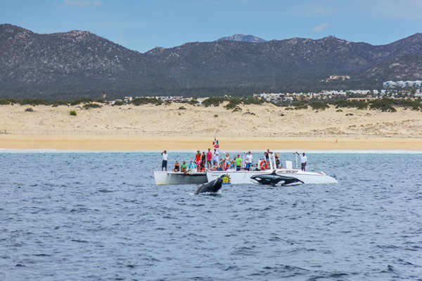 Whale watching in Cabo, Mexico.