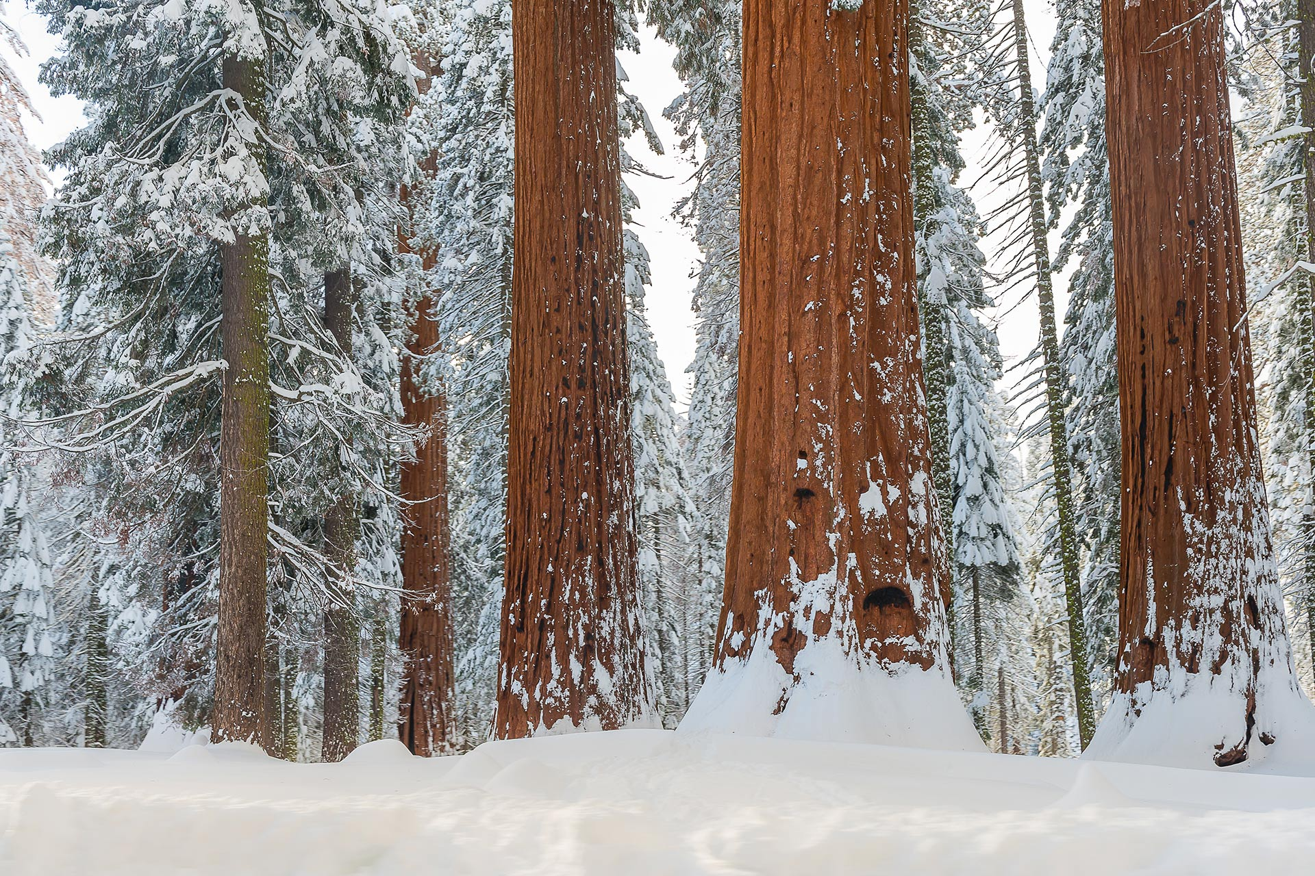 Sequoia and Kings Canyon National Park in the winter.