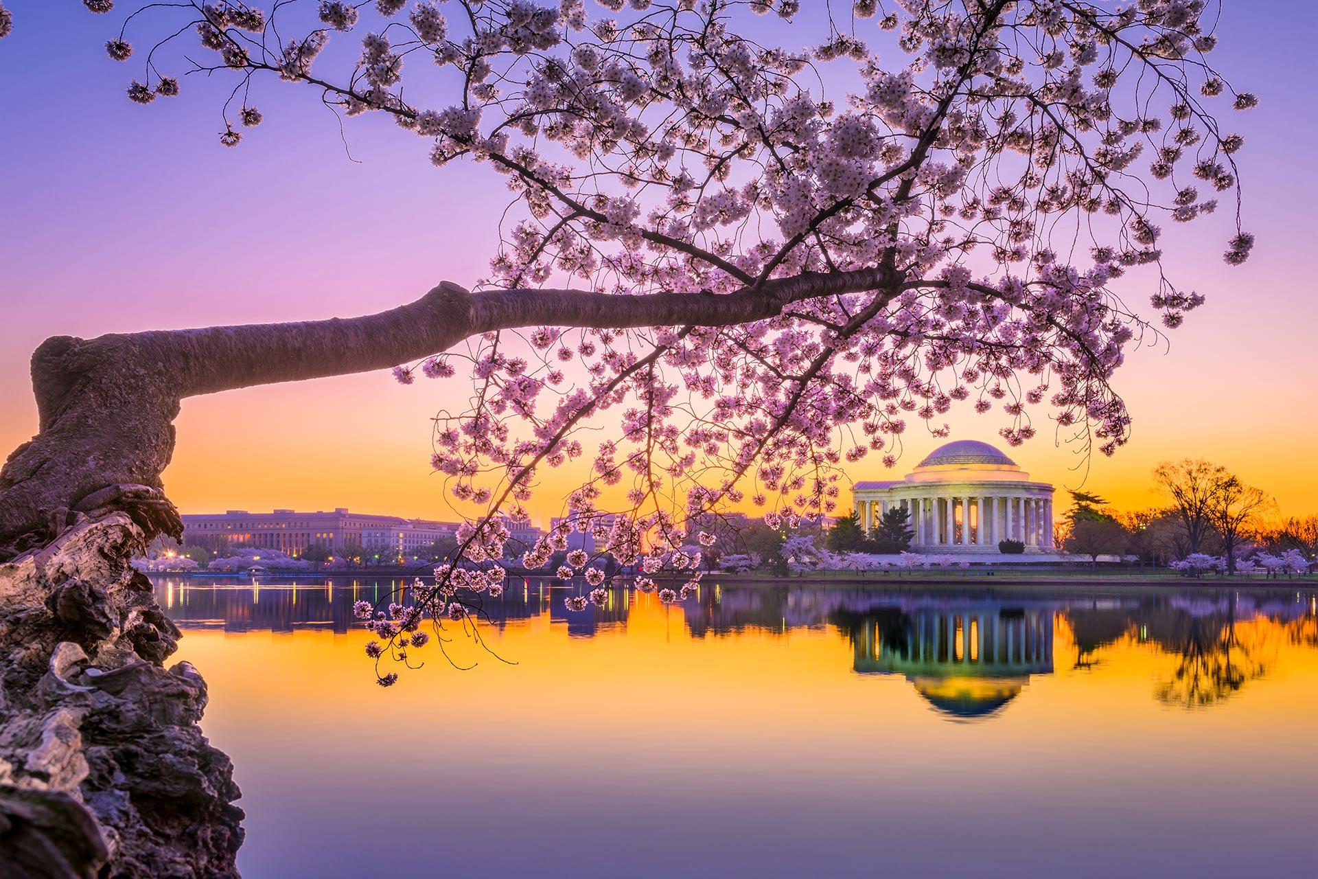 Washington, D.C. at the Jefferson Memorial during spring.