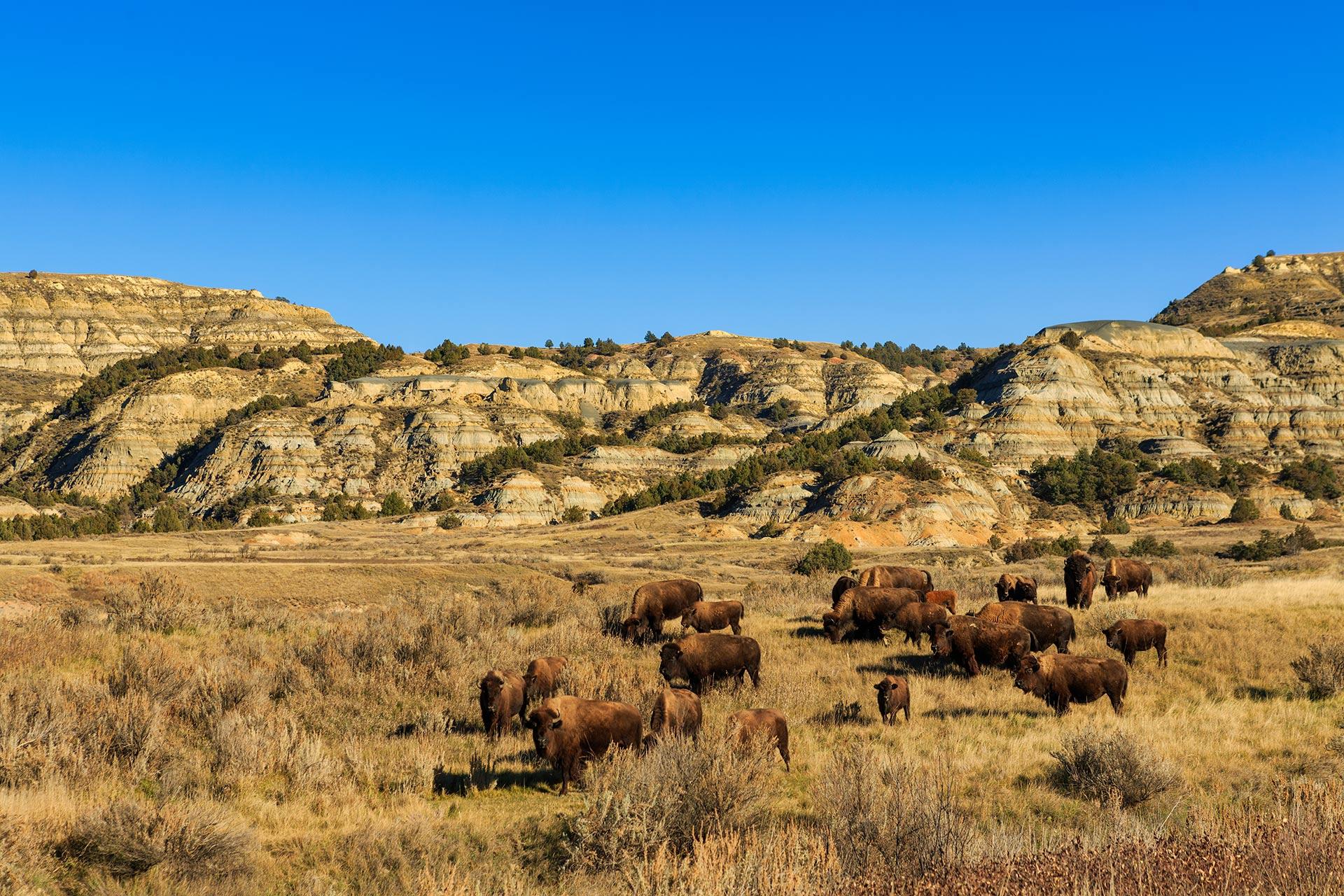 Theodore Roosevelt National Park in Medora, North Dakota.
