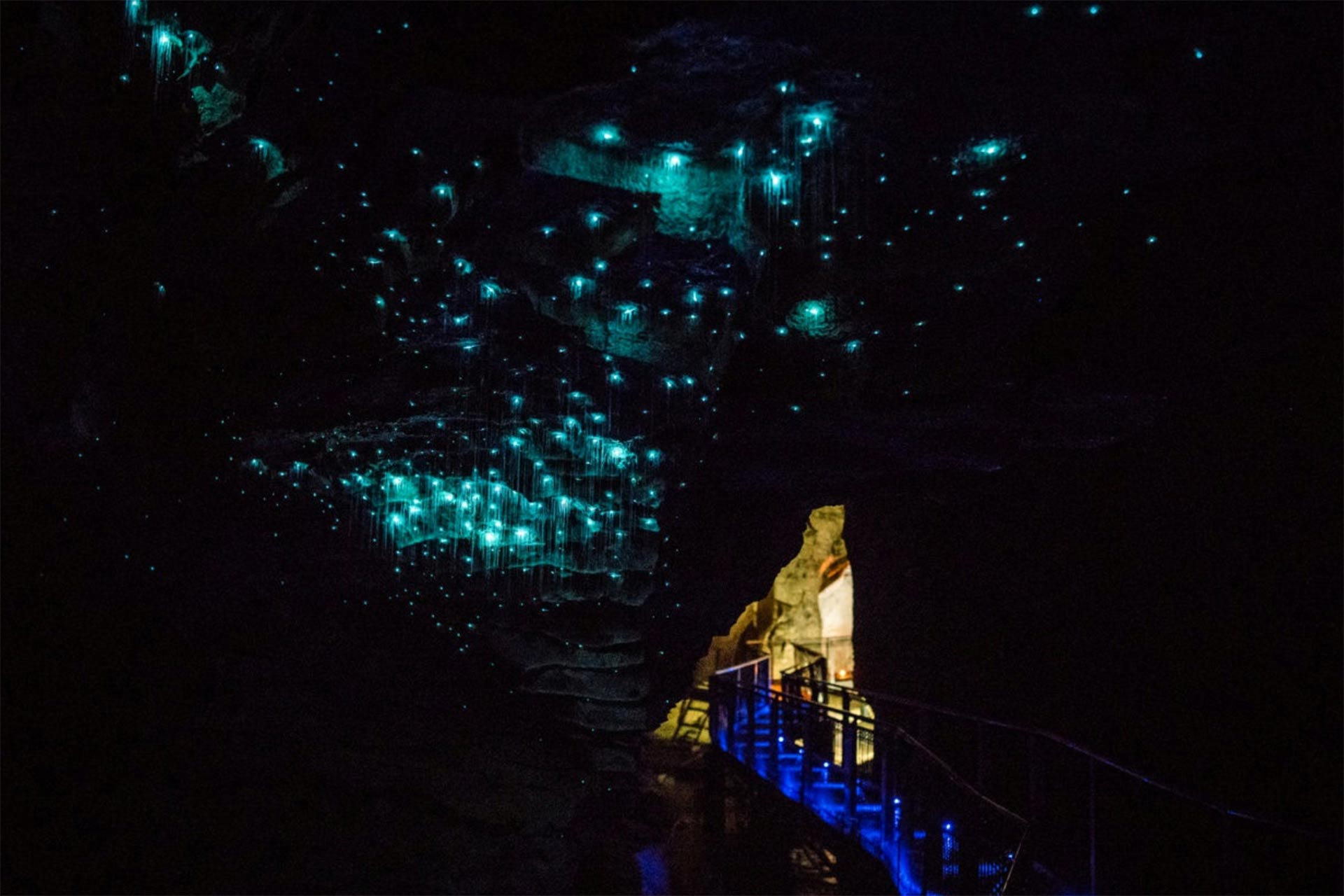 Waitomo Glowworms on New Zealand's North Island