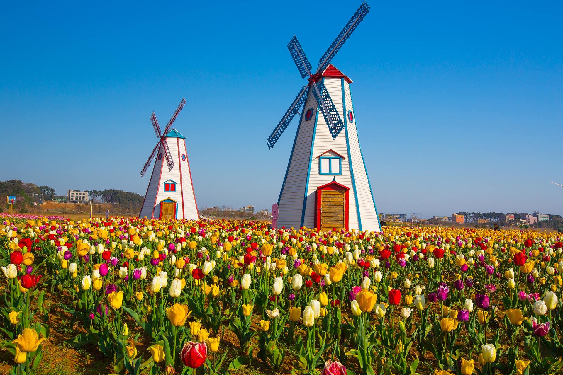 Holland, Michigan.