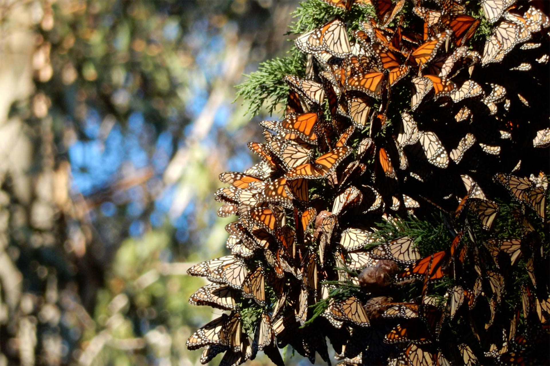Monarch Grove in Pismo Beach, California