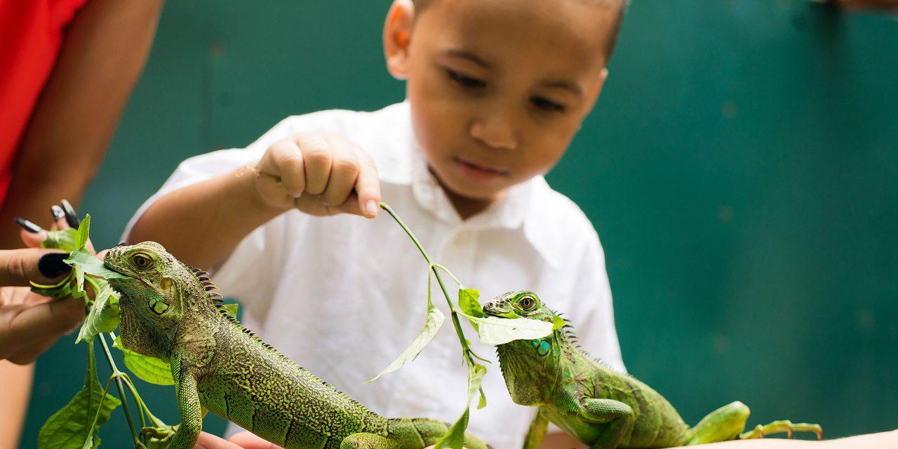 Iguana Encounter; Courtesy of San Ignacio Resort Hotel