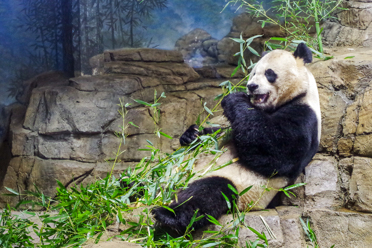 Washington, D.C. National Zoo; Courtesy of Washington.org