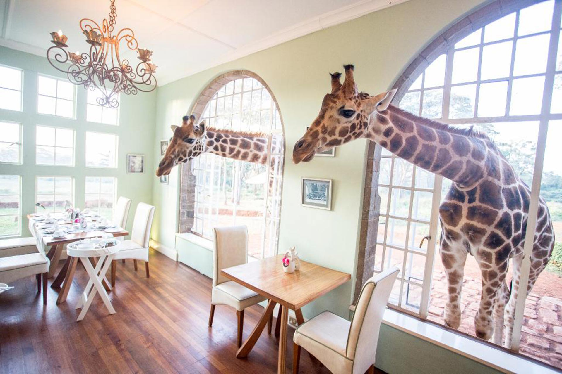 Giraffe Manor; Courtesy of Giraffe Manor