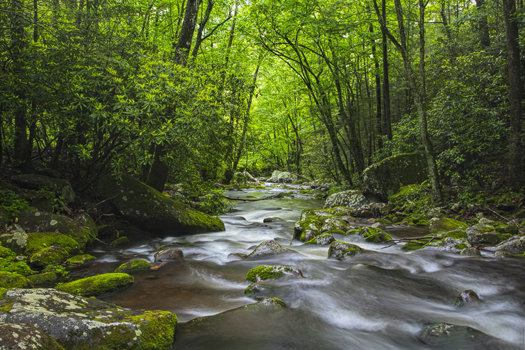 Great Smoky Mountains National Park; Courtesy of DnDavis/Shutterstock