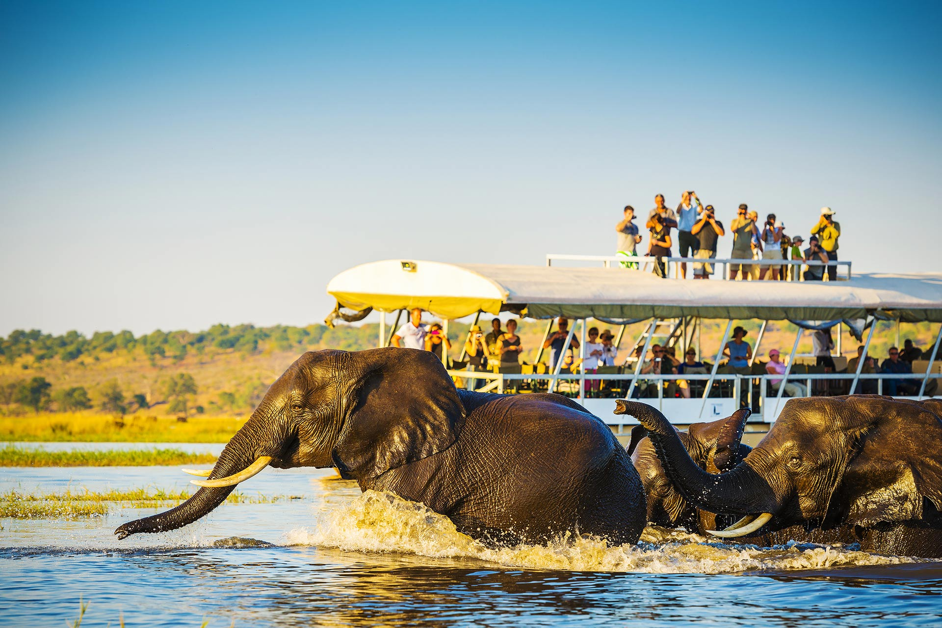 African Safari; Courtesy of THPStock/Shutterstock.com