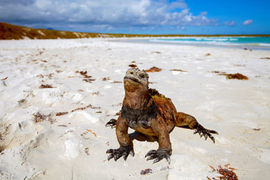 Galapagos Islands Family Vacations Family Vacation Critic