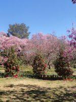 My Big Backyard (at the Memphis Botanic Garden) (Memphis ...