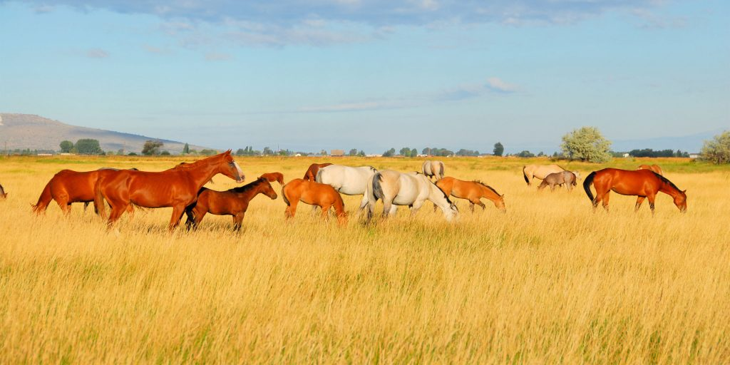 7 East Coast Dude Ranches You Never Knew Existed | Family