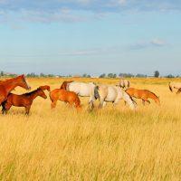 Dude Ranch; Courtesy of Kirk Geisler/Shutterstock.com
