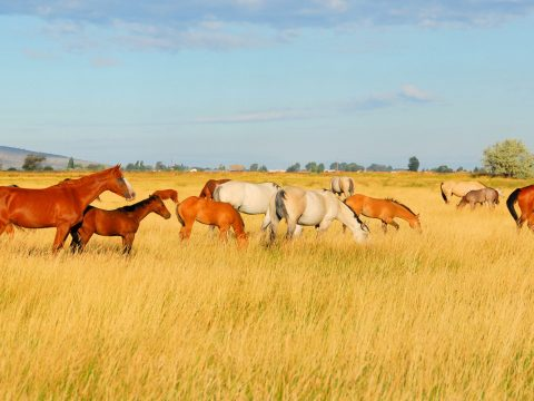 Dude Ranch; Courtesy of Kirk Geisler/Shutterstock.com