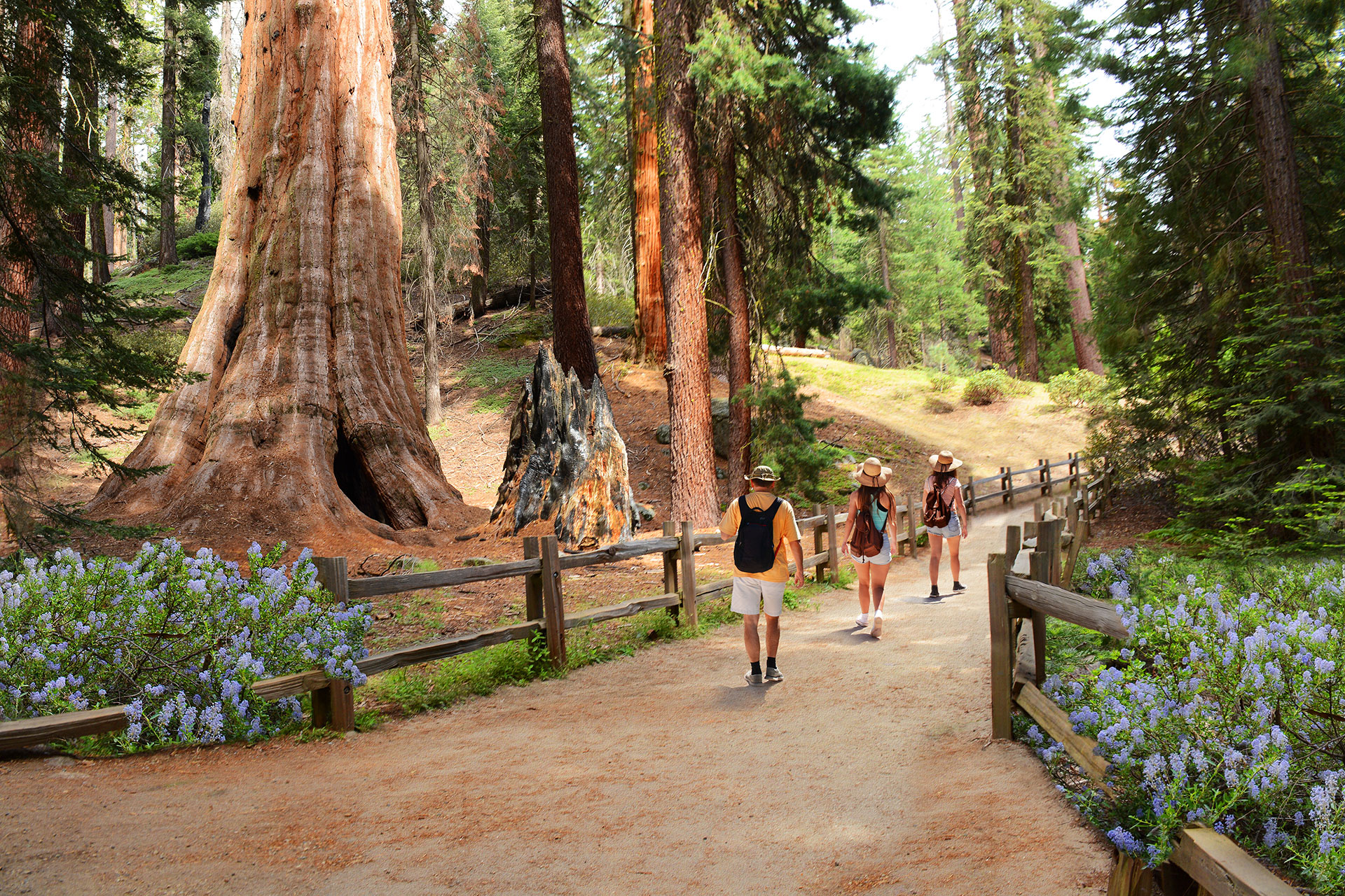 Family Hiking in Sequoia National Park