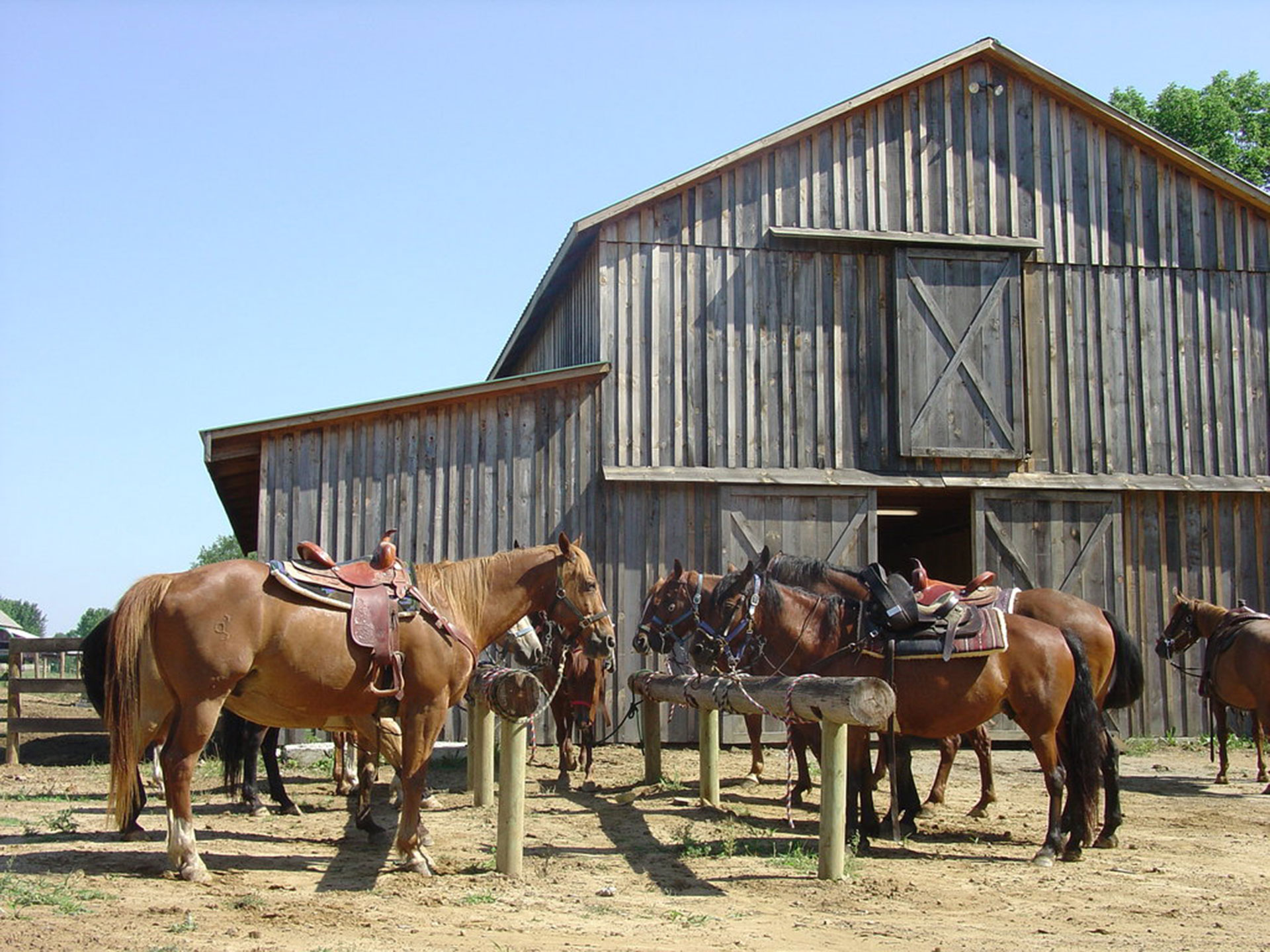 Horses outside the barn at KD Guest Ranch
