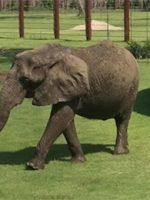 Tanganyika Wildlife Park (Goddard, KS) 2019 Review & Ratings
