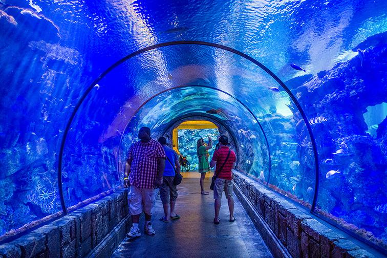 The Shark Reef Aquarium at Mandalay Bay hotel and Casino in Las Vegas; Courtesy of Kobby Dagan/Shutterstock.com