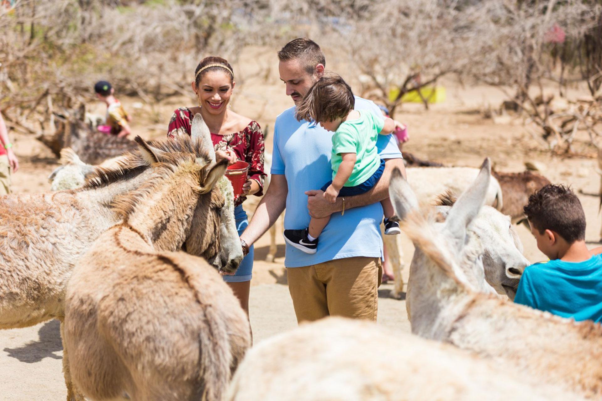 Donkey Sanctuary; Courtesy of Aruba Tourism Authority