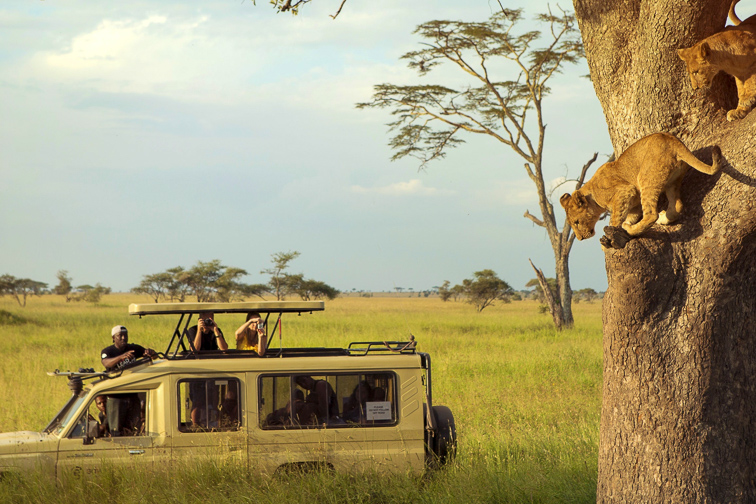 people are inside the car while they enjoy safari trip in the serengeti; Courtesy of zrivoic/Shutterstock