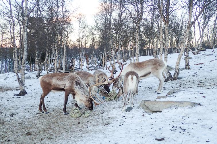 nature park at Langedrag; Courtesy of TripAdvisor Traveler/Lexidh