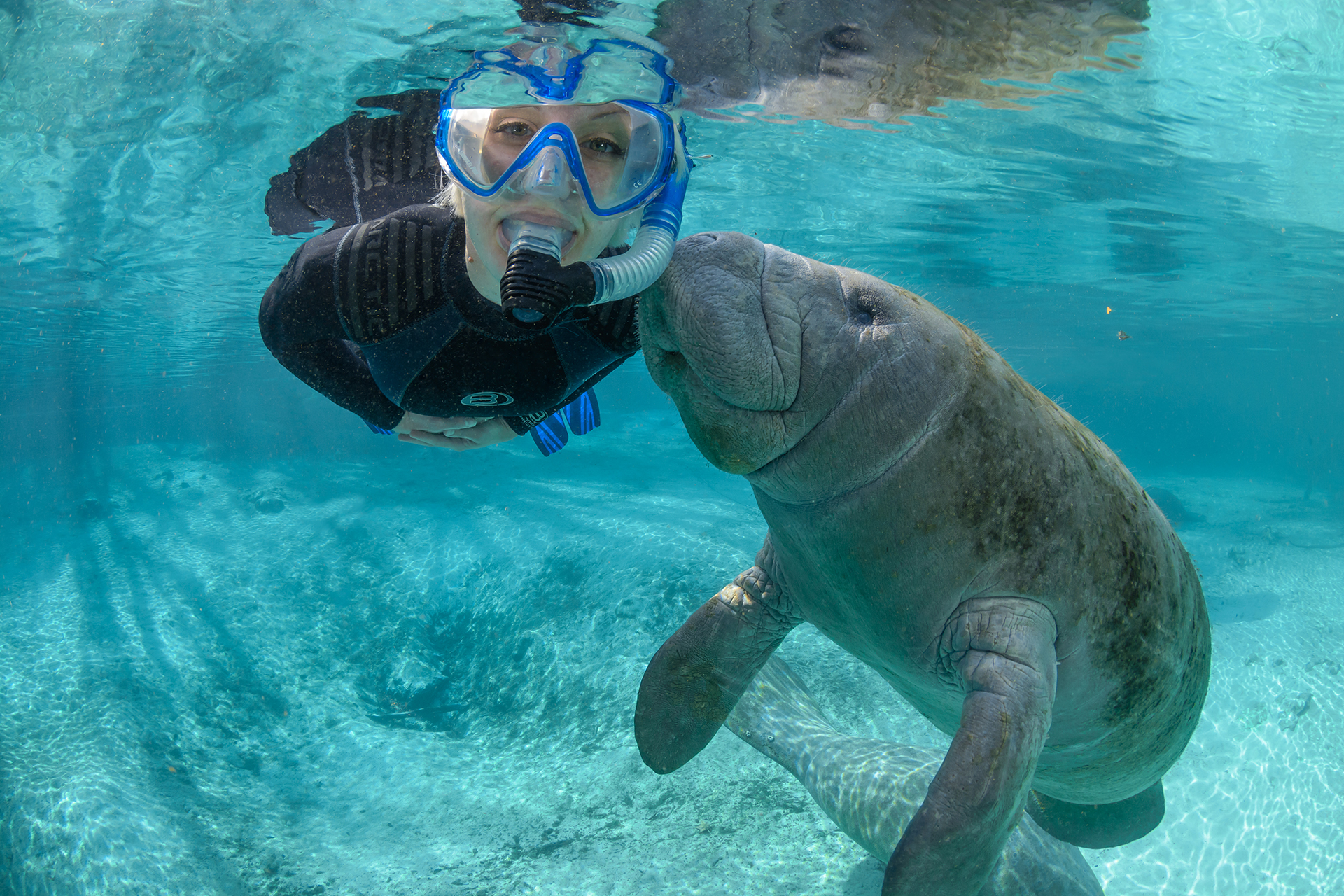 Manatees in Crystal River, Florida; Courtesy of Discover Crystal River