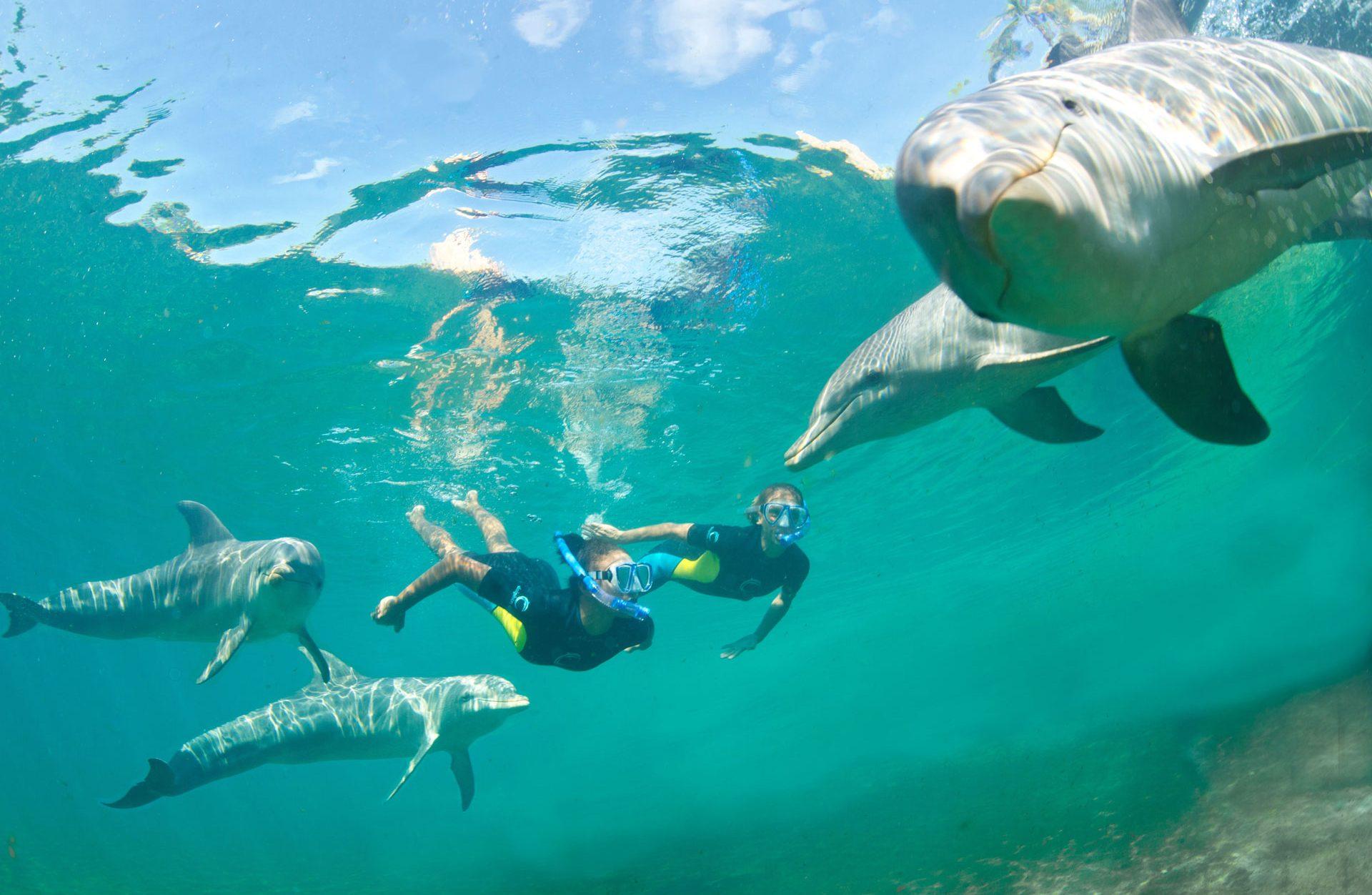Atlantis Dolphin Cay; Courtesy of Atlantis