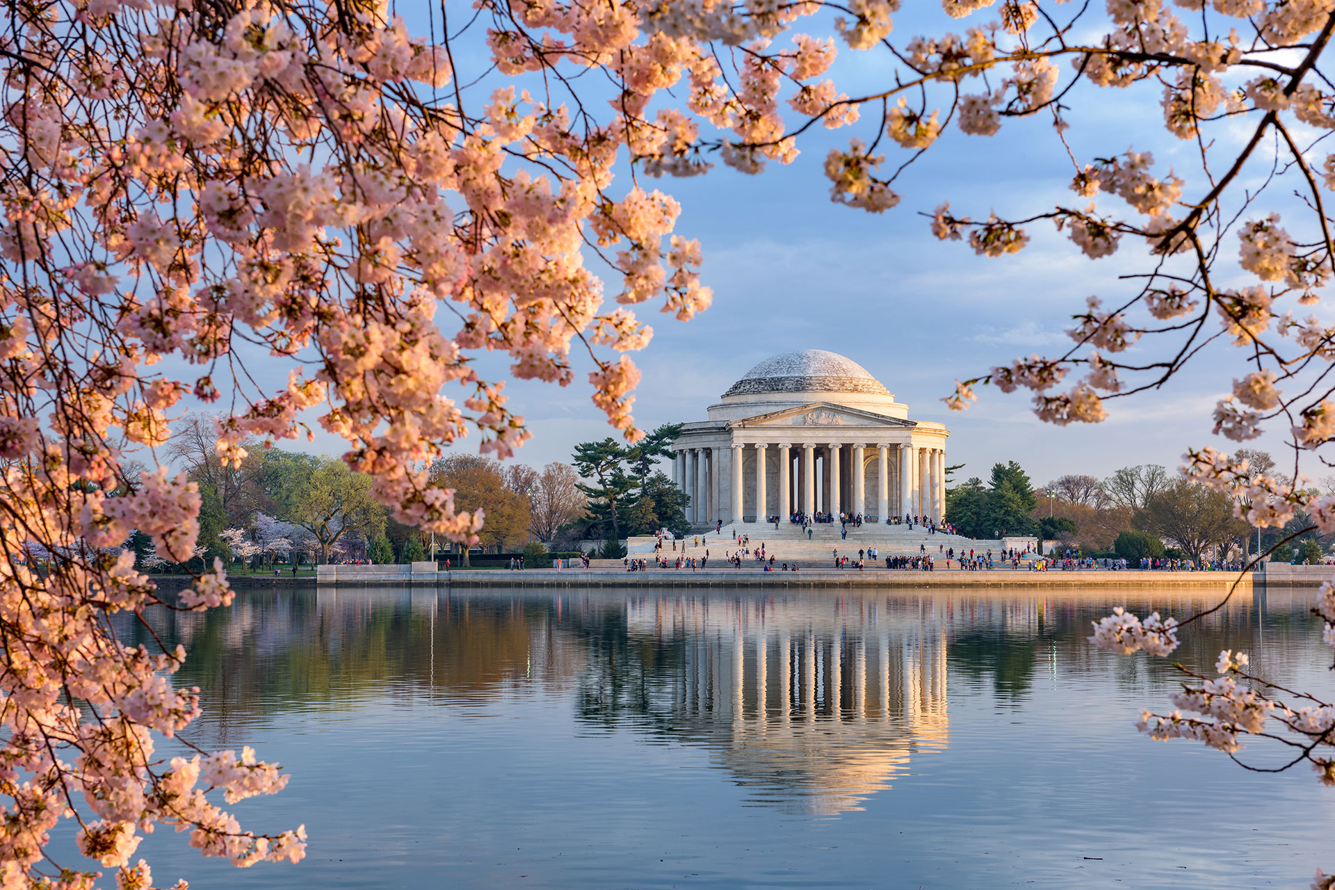 Cherry Blossoms in Washington DC; Courtesy of ESB Professional/Shutterstock.com