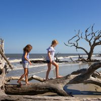 Kids on Driftwood Beach on Jekyll Island; Courtesy of Jekyll Island Authority