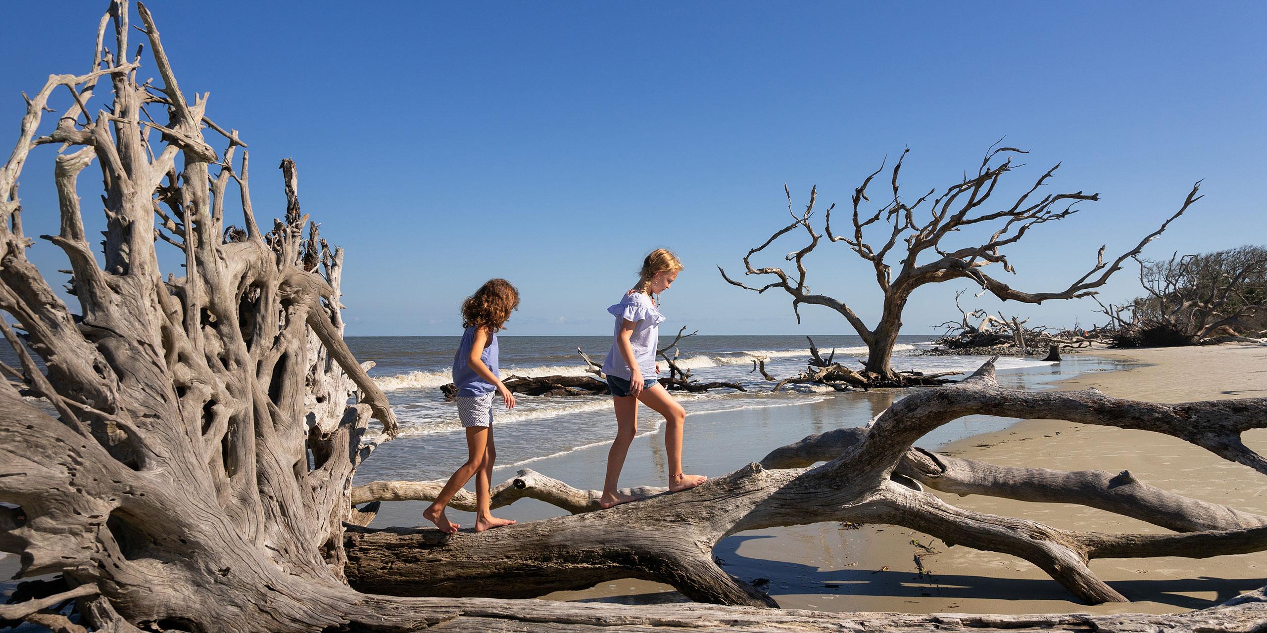 Kids on Driftwood Beach on Jekyll Island; Courtesy of Jekyll Island Authority