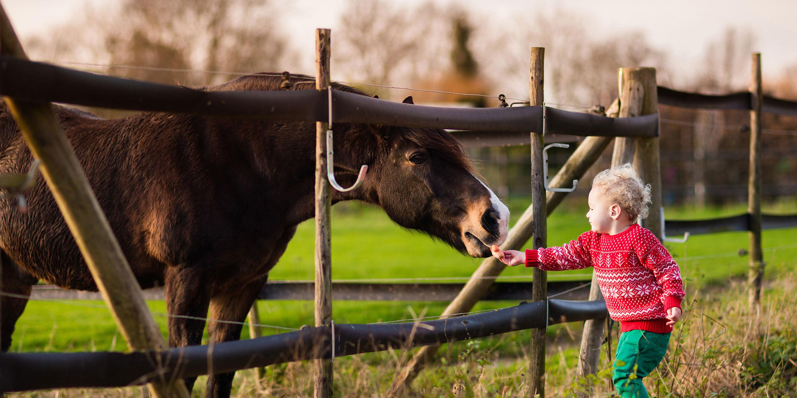 Toddler Petting Horse; Courtesy of FamVeld/Shutterstock.com