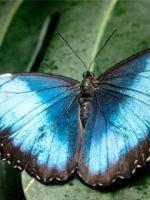 Victoria Butterfly Garden; Courtesy of TripAdvisor Traveler timely_dottie