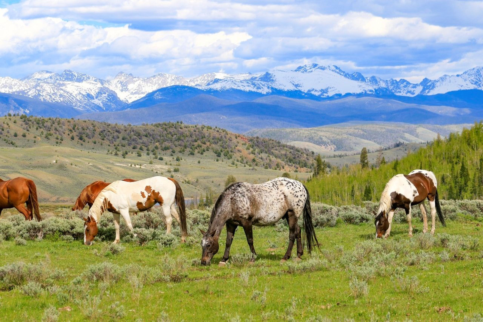 Horses at C Lazy U Ranch in Granby, Colorado; Courtesy of C U Lazy Ranch
