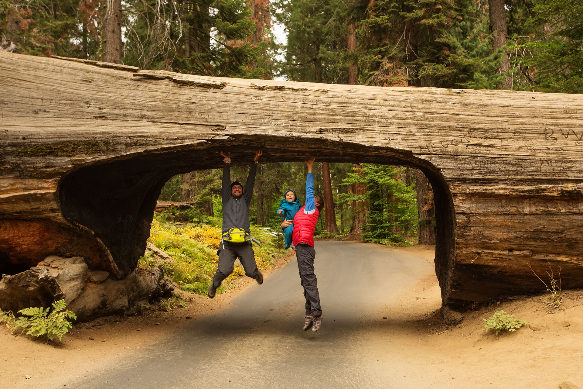 Family with infant visit Sequoia national park in California; Courtesy My Good Images/Shutterstock